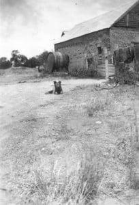 Jones Winery 1930's