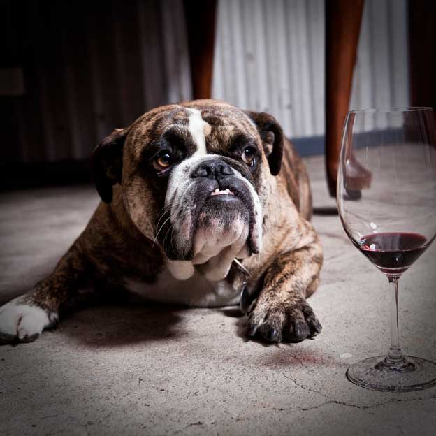 We Are A Dog Friendly Cellar Door